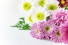 Boeketchsysanthemum mums op witte achtergrond royalty-vrije stock foto's