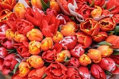 Boeketten van rode, gele tulpengiften voor vrouwen stock afbeelding