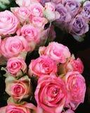 Boeketten van roze en purpere rozen Royalty-vrije Stock Foto's