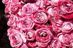 Boeketten van roze rozen Royalty-vrije Stock Foto's