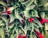 Boeketten van Tulpen bij de Bloemtribune Stock Fotografie