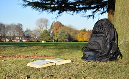 Boeklezing in het park onder boom in zonsondergang Stock Foto's