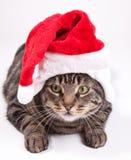 Bożenarodzeniowy kot Zdjęcia Royalty Free