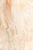 Boer goat wool background Royalty Free Stock Photos