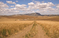 Boerderij in cornfield Stock Foto