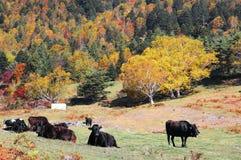 Boerderij met de herfstbos royalty-vrije stock foto