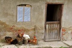 Boerderij met kippen Stock Afbeelding