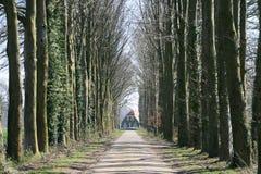 Boerderij tussen bomen Stock Foto
