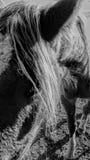 Boerderijpaarden Royalty-vrije Stock Afbeeldingen