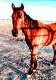 Boerderijpaarden Royalty-vrije Stock Afbeelding