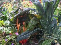 Boerenkool en Zwitserse snijbiet in tuin met bloemen Stock Foto