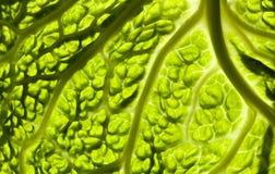 Boerenkool in minimaal Royalty-vrije Stock Afbeeldingen