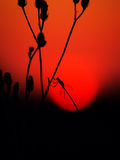 Bofore night. Bug on a grass and sunset at field Stock Images