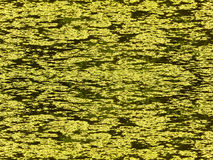 Bog. Vegetation on water an abstract background royalty free stock images