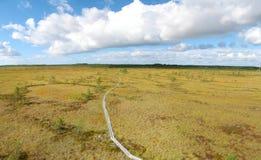 Bog Stock Image