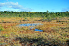 Bog on autumn. Stock Images