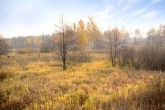 Bog. Autumn Stock Photos