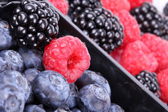 Bog bilberries, raspberry and blackberry. Closeup Royalty Free Stock Photos