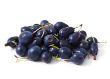 Bog bilberry royalty free stock image
