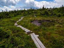 Bog Board Footpath Through Alpine Mountain Terrain. A bog board footpath through alpine plant life on a mountain in Maine, part of the Appalachian Trail in the stock photography
