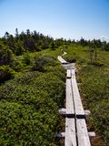 Bog Board Footpath Through Alpine Mountain Terrain. A bog board footpath through alpine plant life on a mountain in Maine, part of the Appalachian Trail in the stock image