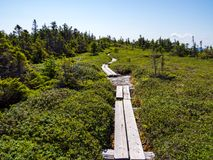 Bog Board Footpath Through Alpine Mountain Terrain. A bog board footpath through alpine plant life on a mountain in Maine, part of the Appalachian Trail in the royalty free stock photo
