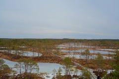 Top view of swamp in Estonia. Raised bog lakes in early springs. Viru bog nature trail. Bog boardwalk is a popular tourist destina stock image