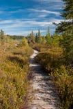 Bog Boardwalk. Photograph of a rickety boardwalk through a northern Wisconsin bog beneath an autumn sky Royalty Free Stock Image