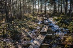 Bog boardwalk is a popular tourist destination in Lahemaa National Park. Estonia. Early springs. royalty free stock photos