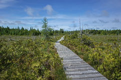Bog in Bruce Peninsula Canada. A bog is a wetland that accumulates peat, a deposit of dead plant material often mosses, and in a majority of cases, sphagnum stock photo
