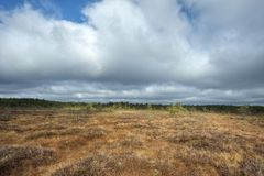 Bog with cloudy sky Royalty Free Stock Images