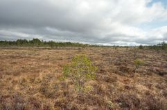 Bog with cloudy sky. In the morning Royalty Free Stock Photography