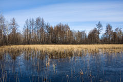 Bog in dead forest Royalty Free Stock Photography