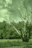 Bog and dry tree Stock Photo