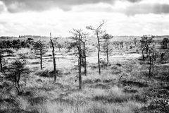 Bog. A bog in early autumn Stock Image