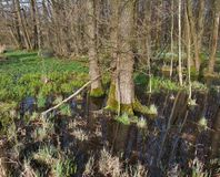 Bog at early spring time Royalty Free Stock Photography