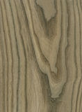 Bog Elm wood veneer texture Royalty Free Stock Photos