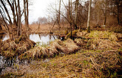 Bog in the forest Stock Photography