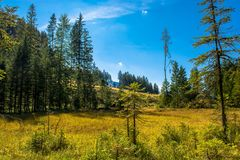 Bog with Forest in Austria Royalty Free Stock Photos