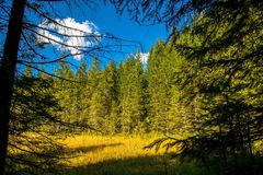 Bog with Forest in Austria Stock Image