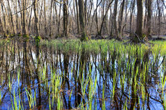 Bog in forest Stock Photography