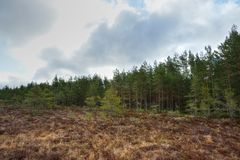 Bog with forest. At spring Stock Images
