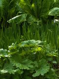 Bog Garden Stock Image