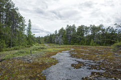Bog. HDR rendition of a bog in Bruce Peninsula Canada. A bog is a wetland that accumulates peat, a deposit of dead plant material often mosses, and in a majority Royalty Free Stock Photos