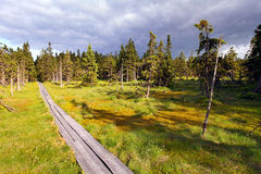 Bog in Krkonose Royalty Free Stock Photography