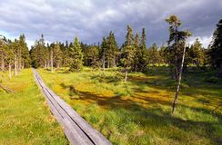 Bog in Krkonose Royalty Free Stock Images