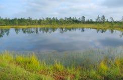 Bog lake. Royalty Free Stock Image