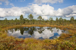 Bog lake Stock Photo