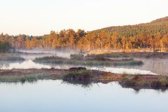 Bog lake Royalty Free Stock Photography