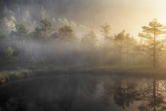 Bog lake in morning fog Stock Image